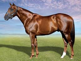 Rebel King arrived at La Berg Stud for the 2015 season. Sire of Champion 2 year old filly La Rebel. Equus Champion Sprinter with a 38% winners to runners for the 2014/2015 season. For any queries or bookings contact Hanno Joubert at 082 929 9516 or email hanno@laberg.co.za